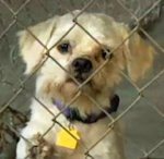 One of the dogs taken from the Cleveland home of Ariel Castro