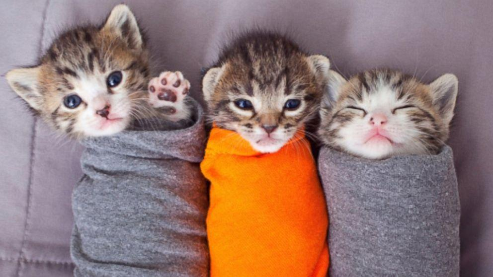 Kittens Wrapped Up Like 'Purritos' Serve Up Some Afternoon Cute