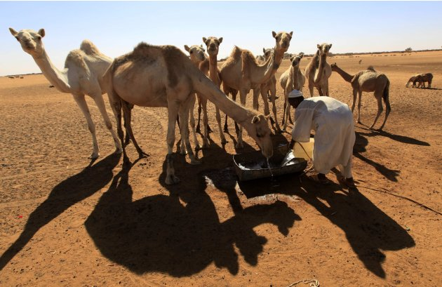 A man pours water from a well for camels to drink in El-Halaba