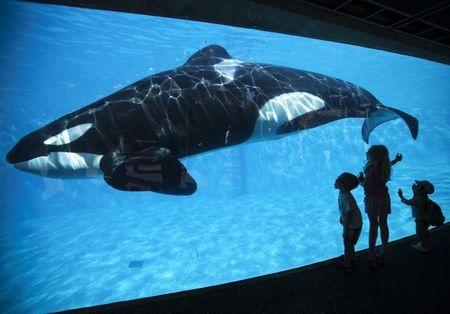California commission to vote on SeaWorld's orca tank expansion