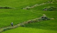 A woman crosses the farming fields at Paro valley, near Thimphu. The majority of farmers in Bhutan are already organic and reliant on rotting leaves or compost as a natural fertiliser