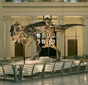 T. Rex Troubles: The Last Dino Legal Battle