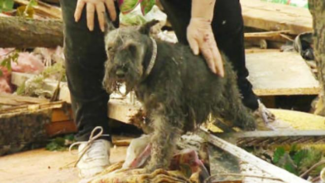 Barbara Garcia's lost dog was found under the pile of rubble that was once her home.