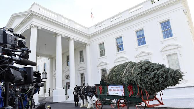 The Official White House Christmas Tree arrives at the White House in Washington, Friday, Nov. 28, 2014. This year's White House Christmas Tree, which will be on display in the Blue Room, is an 18.5-foot Douglas Fir grown by Chris Botek, a second generation Christmas Tree Farmer from Crystal Spring Tree Farm in Lehighton, Penn.  (AP Photo/Susan Walsh)