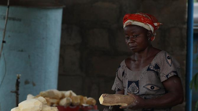 In this photo taken Tuesday, Oct. 2, 2012. A woman peels cassava at the International Institutes for tropical Agriculture in Ibadan, Nigeria. From this field nestled among the lush rolling hills of Nigeria's southwest, the small plants rising out the hard red dirt appear fragile, easily crushed by weather or chance. Looks, however, are deceiving.These cassava plants will grow into a dense thicket of hard, bamboo-like shoots within a year, with roots so massive a single planted hectare can provide three tons of food. The plants survive fires, droughts and pestilence, while offering a vital food source for more than 500 million people living across sub-Saharan Africa. (AP Photo/Sunday Alamba)