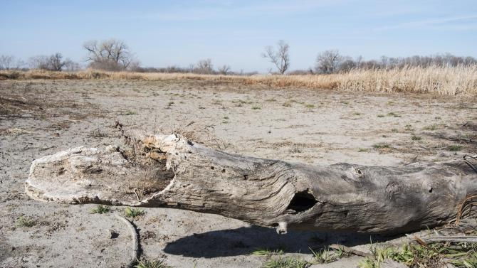 A tree trunk rests on the bed of a dried lake, the outcome of severe drought, in Waterloo, Neb., Tuesday, Nov. 20, 2012. A new report shows that the nation's worst drought in decades is getting worse again, ending an encouraging five-week run of improving conditions. The weekly U.S. Drought Monitor report shows that 60.1 percent of the continental U.S. was in some form of drought as of Tuesday. That's up from 58.8 percent the previous week.  The portion of the lower 48 states in extreme or exceptional drought — the two worst classifications — also rose, to 19.04 percent from last week's 18.3 percent. (AP Photo/Nati Harnik)