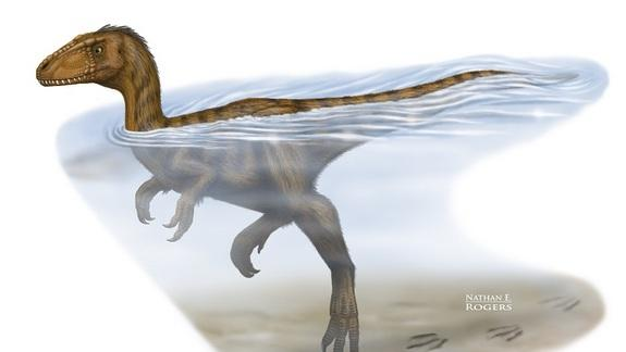 Dinosaur Was a Strong Swimmer, Doggy-Paddle Style