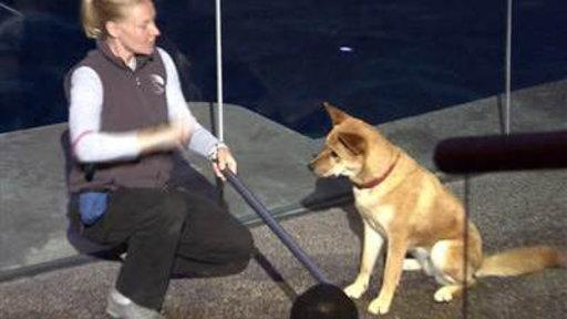 Dogs Make a Splash at Chicago Aquarium