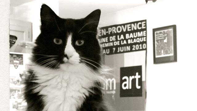Henri the Cat Goes Viral, Turns Profit in the Name of Art