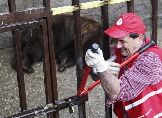 "An activist from ""Four Paws"" cuts a bear cage at a private zoo in the Kosovo town of Prizren"