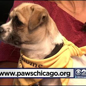 PAWS Pet Of The Week: Sonja