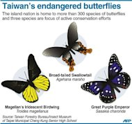 Graphic on Taiwan&#39;s endangered butterflies. The island nation is home to more than 300 species of butterflies