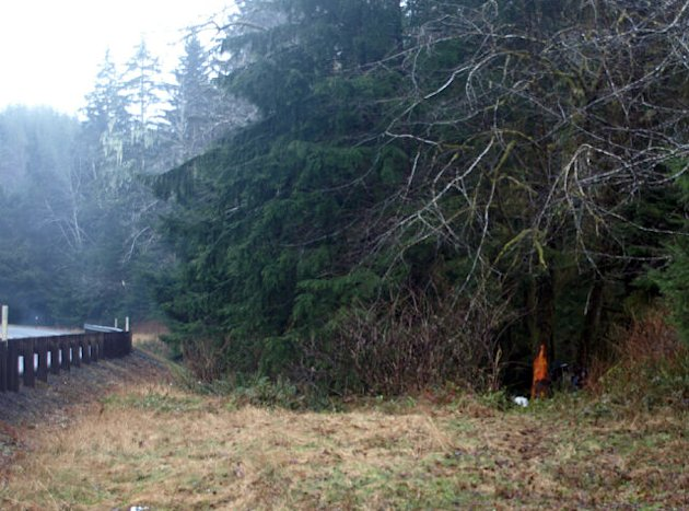 This photo provided by the Washington State Patrol shows the scene of a crash near Naselle, Wash., on Wednesday, Feb. 20, 2013. Authorities say passing motorists stopped to investigate a damaged tree and found two young girls injured in an accident that killed their mother. The Washington State Patrol estimates the car driven by 26-year-old Jessica Marie Rath of Astoria, Ore., hit the tree sometime early Wednesday morning. (AP Photo/Washington State Patrol, Sgt. Brad Moon)