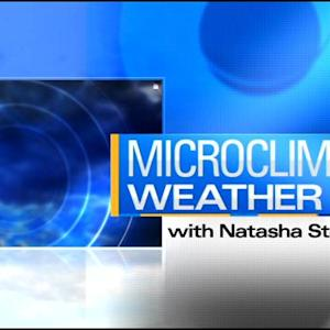 MicroClimate Forecast: Thursday, December 5, 2013 (Morning)