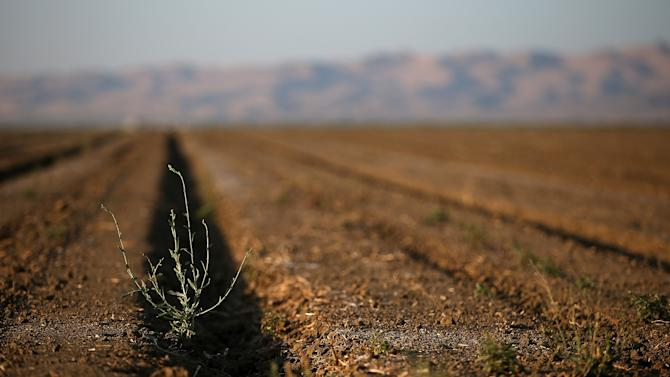 As the severe drought in the western US continues, a field goes unplanted in Firebaugh, California on August 21, 2014