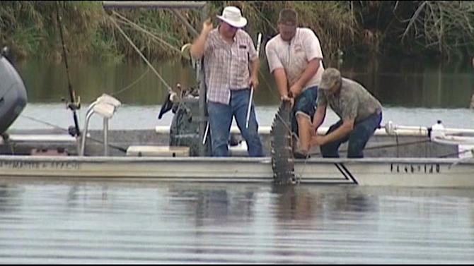 In this image made from video, an 11-foot alligator that attacked a swimmer is pulled from the water after it was killed Monday evening, July 9, 2012 in the Caloosahatchee River near Moore Haven, Fla. Fish and wildlife Commission (FWC) workers, Glades County Sheriff's deputies and trappers found and killed the gator, which had attacked 17-year old Kaleb Langdale, taking his right arm. FWC, the Glades County Sheriff's Office and trappers found the gator and retrieved Langdale's arm from inside, but doctors were not able to reattach it. (AP Photo/WBBH TV)