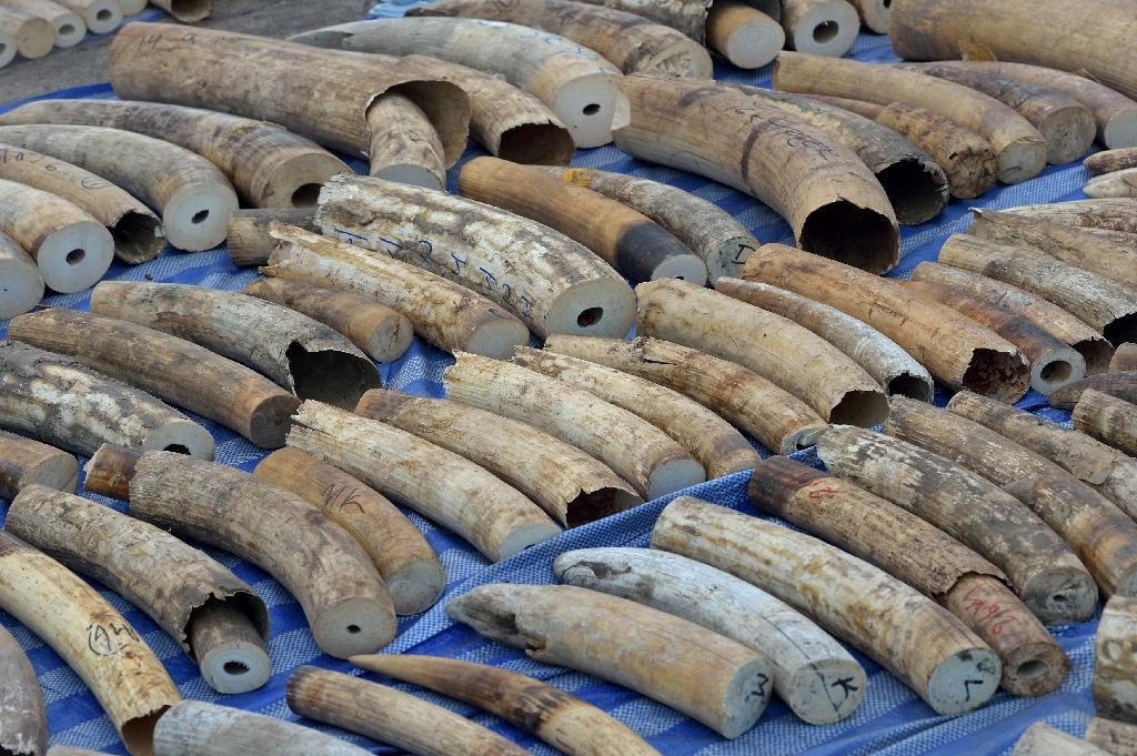 Thai customs seize African elephant tusks worth $6 mn