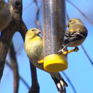 Small birds chirp again after tough and long winter