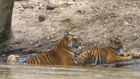 New Tiger Reserve Established in India