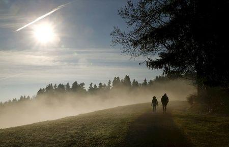 Europe's shift to dark green forests stokes global warming-study