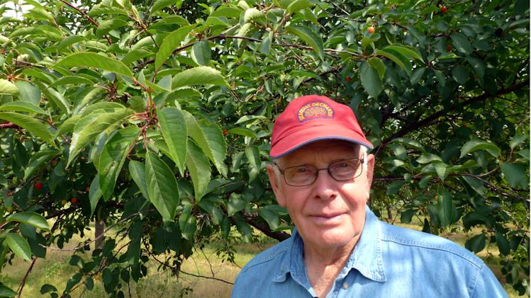 Tart cherry crop in Midwest destroyed by weather