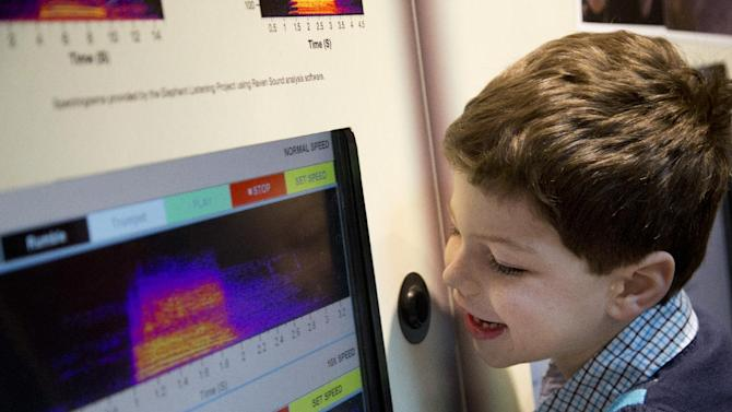 "Ethan Schipper, 5, of Vienna, Va., records his voice and mimics an elephant's sound and looks at a spectrogram in the Elephant Community Center at the Smithsonian's National Zoo in Washington, Thursday, March 21, 2013. The Smithsonian's National Zoo in Washington is opening an expansive new community center for elephants and hopes to begin expanding its herd. The public opening of ""Elephant Trails"" on Saturday marks a major expansion for the Asian elephant exhibit. The $56 million overhaul was completed over the past seven years.  (AP Photo/Manuel Balce Ceneta)"