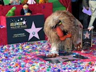 Muppets gets Hollywood star