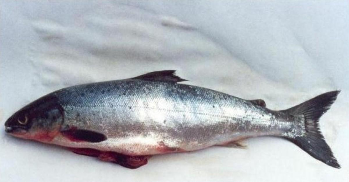 11 Fish That Should Never Be Eaten