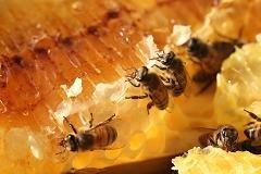 Bee activists swarm on Home Depot and Lowe's