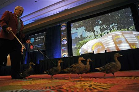 The Peabody's famous ducks march across the stage with Duck Master Donald Tompkins before the announcement of the Drive Electric Orlando program