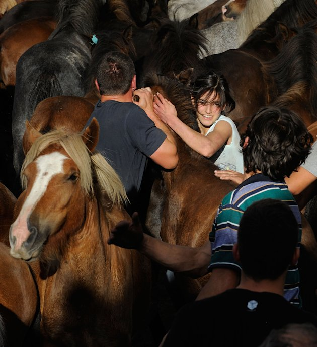 Wild Horses Are Tamed and Sheared for the Rapa das Bestas