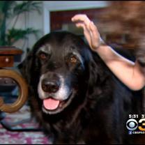 New Start For Dog Of Children Killed In Tabernacle