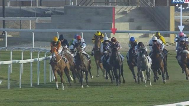 Horse Racing Time  : Doha 2/2
