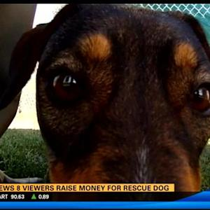 CBS News 8 viewers raise money for rescue dog