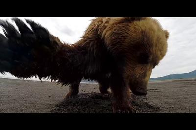 This is what it looks like if you got slapped by a bear