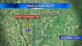 Agents bust pot grow in Franklin corn field