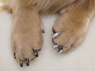 5 Types of Nail Polish ... for Your Dog
