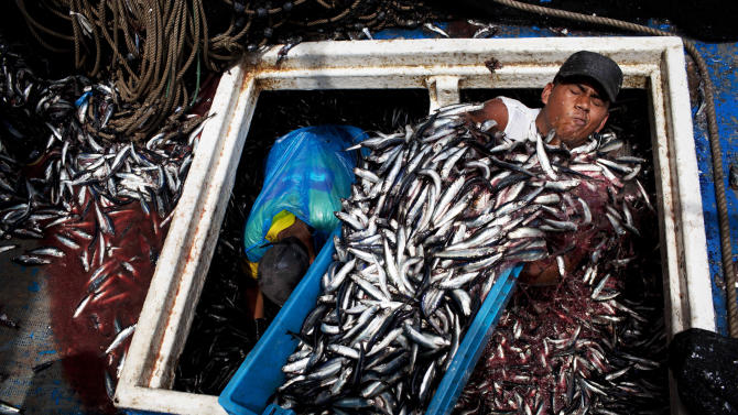 Peru seeks to save a little fish with big impact