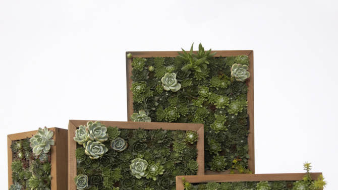 This undated publicity photo courtesy of Flora Grubb Gardens shows various horizontal and vertical living pictures made with succulent cuttings in San Francisco. Living pictures, cuttings of assorted succulents woven together in everything from picture frames to pallet boxes, are hot among garden designers and landscapers this spring as an easy, modern way to add color and texture to an outdoor space. (AP Photo/Flora Grubb Gardens, Caitlin Atkinson)