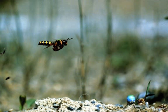 Buzzworthy View: See the World Through a Wasp's Eyes