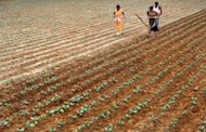 An Indian farmer ploughs his field with the help of family members on the outskirts of Bangalore on August 3. India's economic growth could slip to near six percent this year with the country facing the spectre of its third drought in a decade, a top government policymaker says