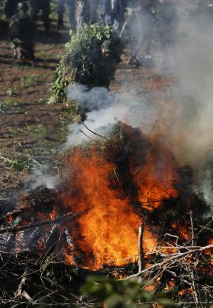 Soldiers incinerate marijuana plants at an illegal plantation found during a military operation on Friday at the Culiacan mountains, northern Mexico, Monday, Jan. 30, 2012. The drought in northern Mexico is so bad that it has hurt even illicit drug growers and their normally well-tended crops of marijuana and opium poppies, Gen. Pedro Gurrola, commander of army forces in the state of Sinaloa, said Monday. (AP Photo/Marco Ugarte)