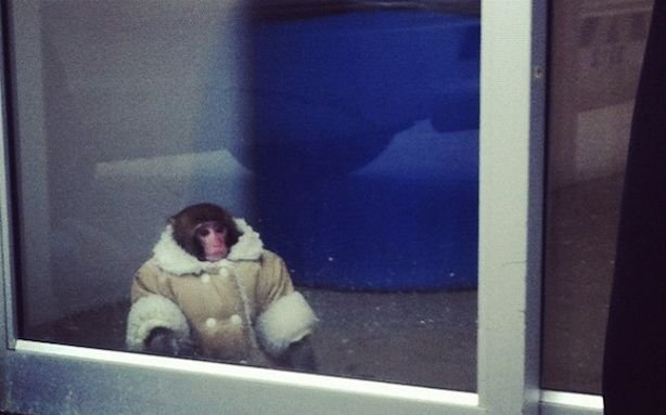 Monkey found at a Toronto Ikea