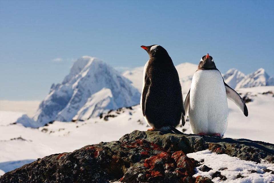 Penguins aplenty in Antarctica, satellite map shows