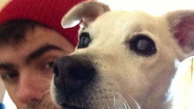 Nathan Sykes and dog Harry -- Twitter