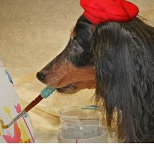 Blind, rescued Dachshund's artwork helps other rescue dogs