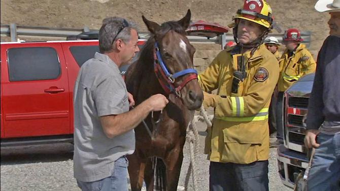 Horse rescued after falling into Orange County ravine