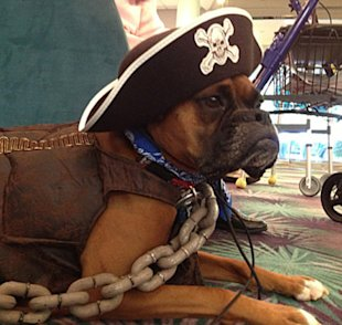Kayla visits a nursing home dressed as a three-legged pirate for Halloween — including a very convincing plastic chain.