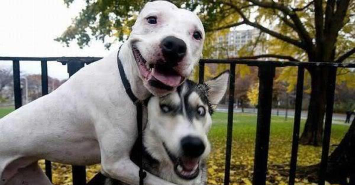 15 Adorably Awkward Dogs That Forgot How to Dog