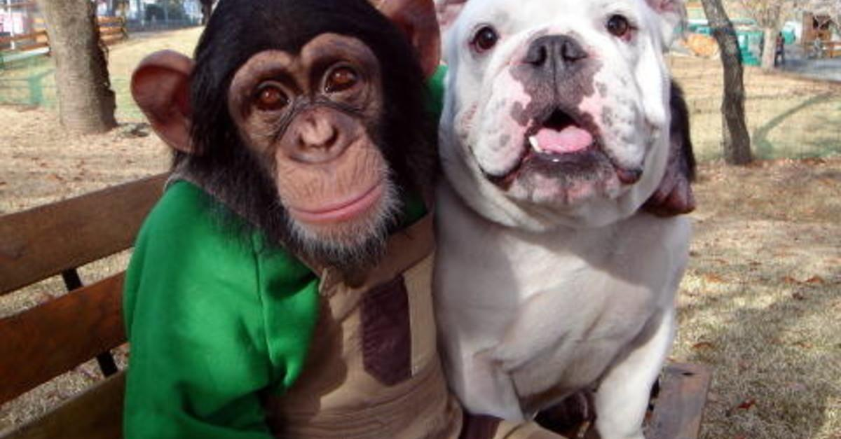 17 Animals Being Total Bros